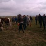 De mensen konden hooi geven aan onze koeien als ze dat wilden.