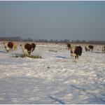 Grote groep in de sneeuw