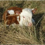 Maxima ligt heerlijk in het gras