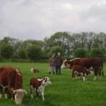 Onze koeien zijn ook mensvriendelijk.